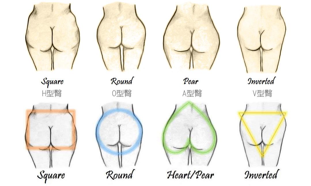 臀型的分類