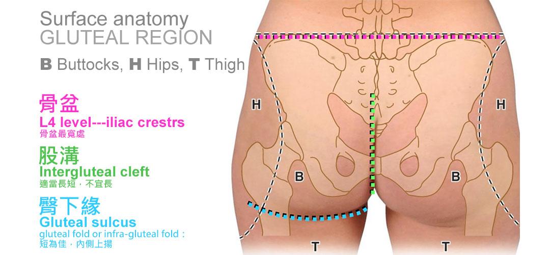 骨頭解剖圖