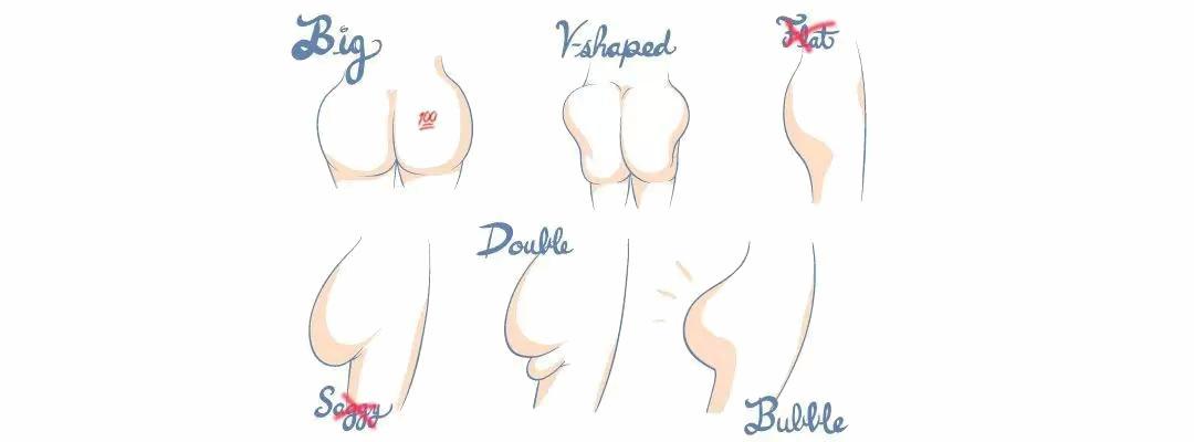 臀型解說圖1